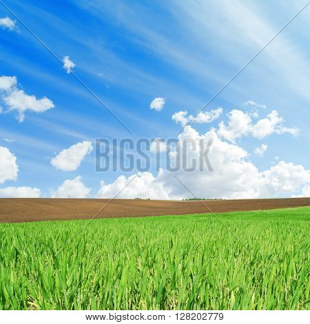agriculture green and black fields and white clouds in blue sky