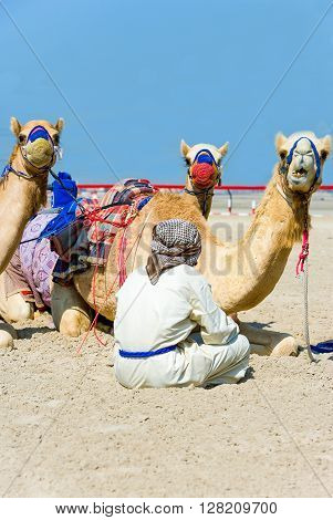 Dubai relax of camel racing in training in the outskirts of the city