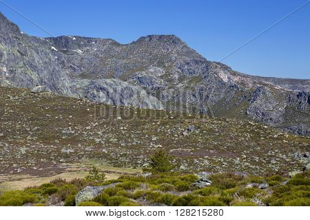 Serra da Estrela view with alpine flowers in Portugal