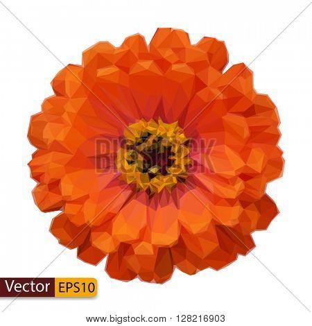 Vector low poly Zinnia elegans flower