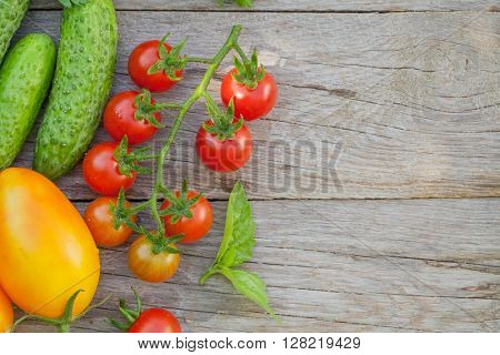 Fresh ripe vegetables and herbs on garden table. Top view with copy space