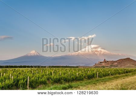 Grape field in Ararat valley. View of Khor Virap and Mount Ararat. Exploring Armenia