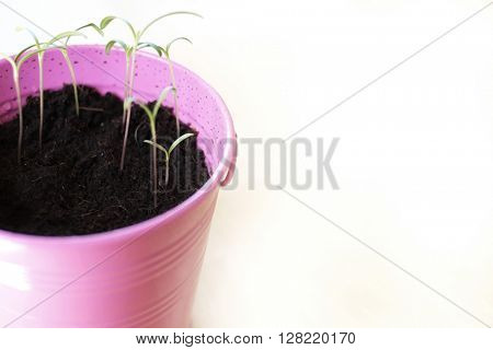 Pink Pail Potted Plant Green Growth Soil Dirt