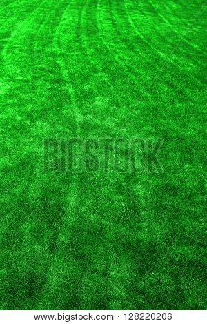 Closeup of texture in green grass lawn detail mowing lines