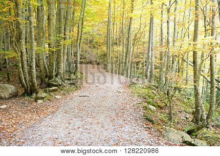 Hiking trail in Ordesa National Park, Pyrenees, Huesca, Aragon, Spain.