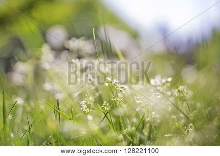 Soft nature scene