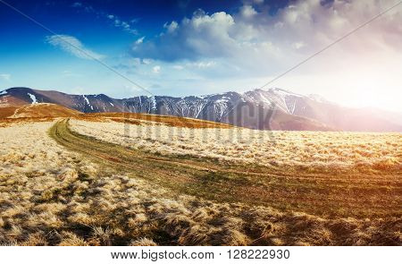 Magical yellow dry grass glowing by sunlight. Dramatic scene and picturesque picture. Location place Carpathian, Ukraine, Europe. Beauty world. Soft filter, vintage style. Instagram toning effect
