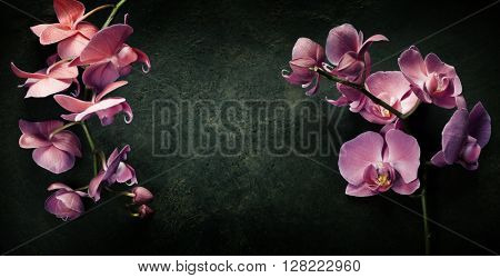 Pink orchid on a dark vintage background