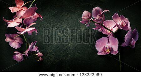 Pink orchid on a dark vintage background
