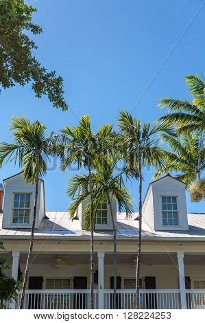 Three Dormers Behind Palm Trees in Key West
