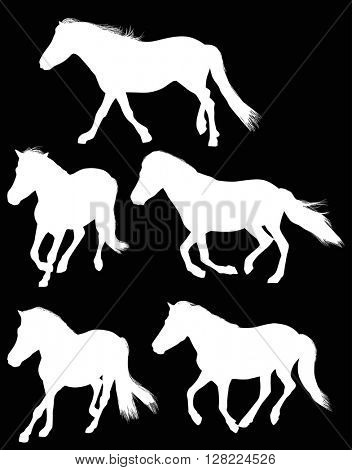 illustration with five horses isolated on black background