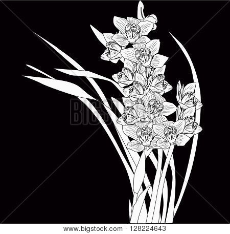 illustration with orchid flowers sketch isolated on black background