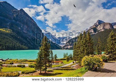 Flowers on the mountain glacial lake Louise. Beautiful sunny day in Banff National Park, Rocky Mountains, Canada