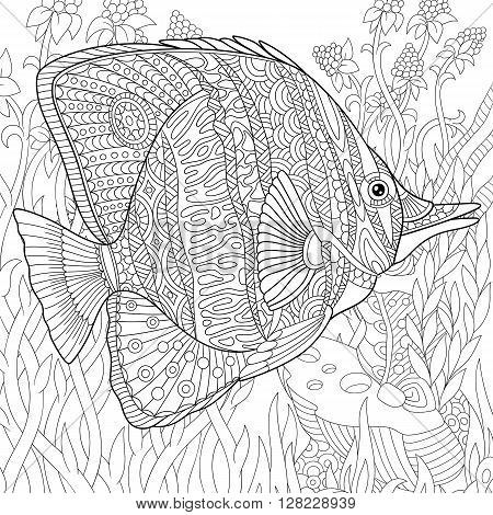 Zentangle stylized cartoon butterfly fish swimming among seaweed. Hand drawn sketch for adult antistress coloring page T-shirt emblem logo or tattoo with doodle zentangle floral design elements.