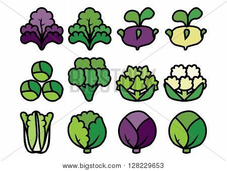 Set of colored linear icons with varieties cabbage.