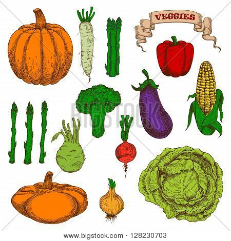 Vintage engraving autumnal harvest pumpkin, eggplant, cob of sweet corn, bell pepper, pungent onion, beet, cabbage, broccoli, bunches of asparagus, daikon and kohlrabi vegetables sketches.