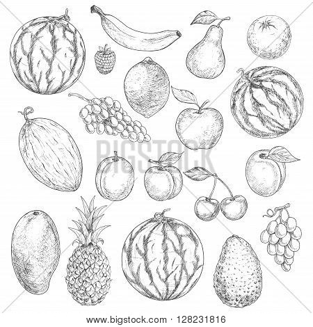 Delicious summer fruits vintage engraving sketches with orange apple grape banana lemon pear mango pineapple peach raspberry watermelon avocado cherry plum melon and apricot. Agriculture harvest design usage