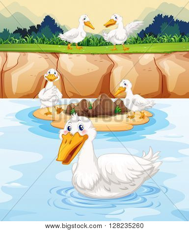 Five ducks at the pond illustration