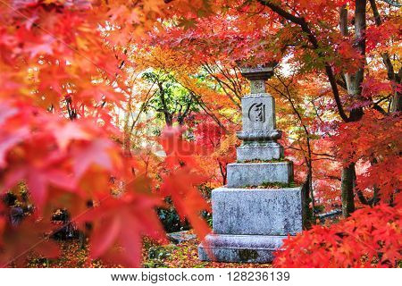 Autumn Colors In Japan/beautiful Autumn Leaves