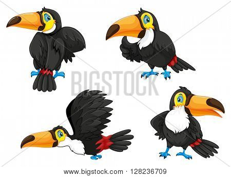 Four toucans in different poses illustration