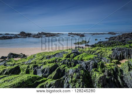Sea stones covered with green algae. Seaview.