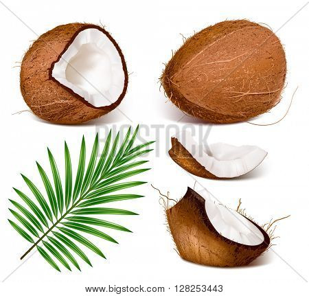 Coconuts with leaves. Fully editable handmade mesh. Vector illustration.
