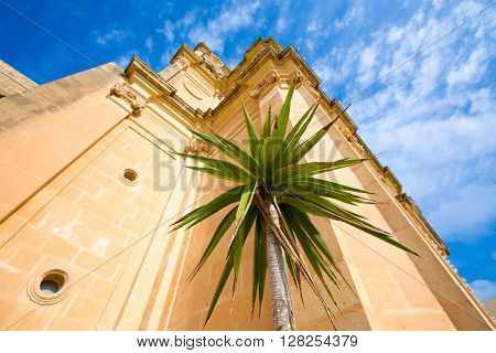 Palm tree and old building in the Palmyra city