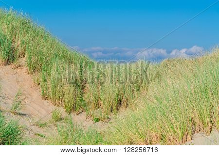 Landscape with beach overlooking the sea sand dunes and grass Ouddorp North Sea Holland.