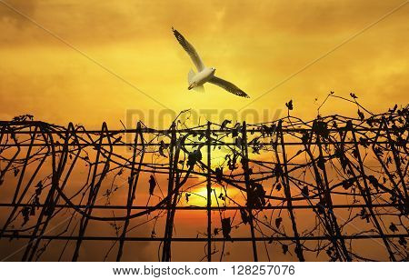 Seagull flying above metal fence with dry leaves over sunset sky Freedom concept