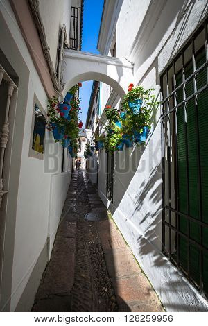 Cordoba, Spain- 12 March2015:Flowers in blue flowerpot on the walls on streets of Cordoba. Spain