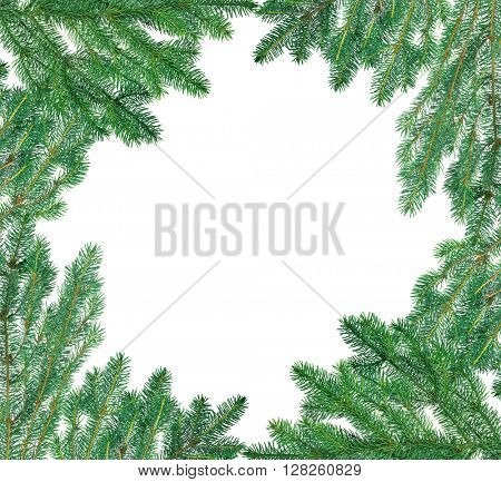 frame from blue fir branches isolated on white background