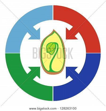 Elements Infographic plant growth stage germination of grain beans seeds. Seed sprout inside and colored circle with arrows.