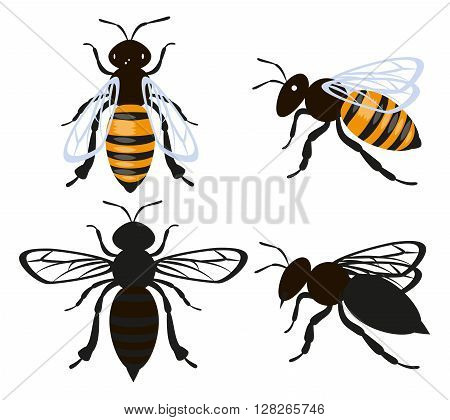 Set bee insect. Isolated on white vector illustration
