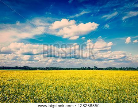 Spring summer background - vintage retro effect filtered hipster style image of  yellow canola field with blue sky