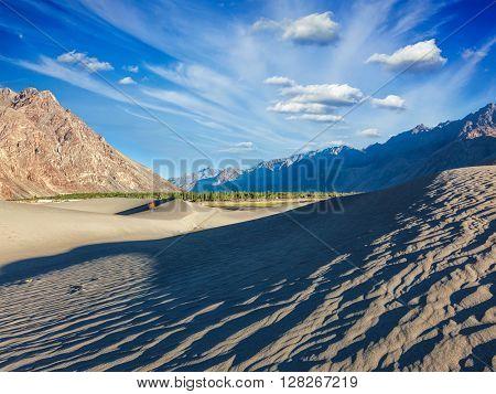 Sand dunes in Nubra valley in Himalayas. Hunder, Nubra valley, Ladakh