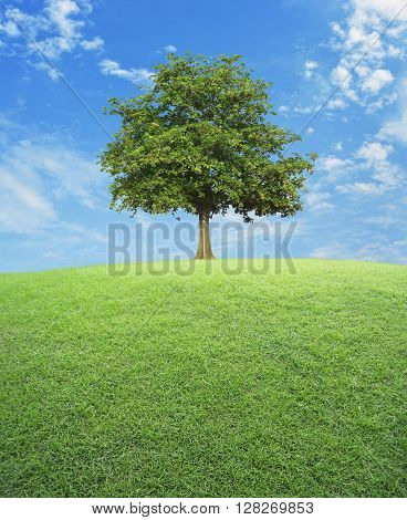 Big tree with green grass field over blue sky nature background
