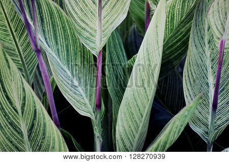 green plants with colorful veins on leaf