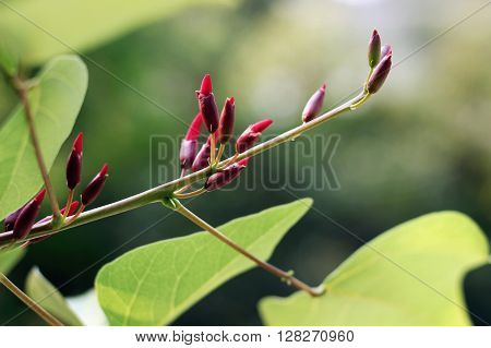 green plants with small red flower buds