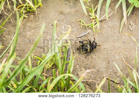 Beetle Viewed From Below.