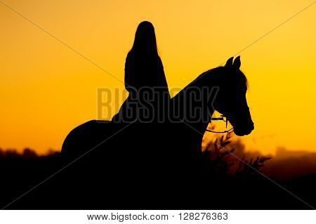 Silhouette of a rider and horse on a background of sunrise or sunset. Girl riding a stallion.
