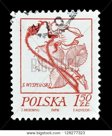 POLAND - CIRCA 1974 : Cancelled postage stamp printed by Poland, that shows Rose.
