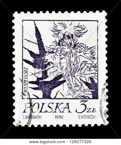 POLAND - CIRCA 1974 : Cancelled postage stamp printed by Poland, that shows Thistle.