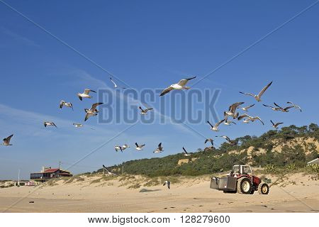 A flock of seagulls flying in direction of the sea in the clear blue sky