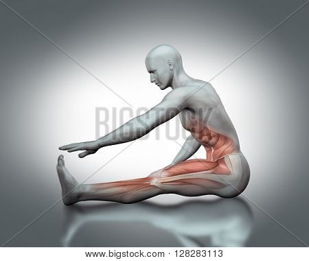 3D male medical figure with partial muscle map in stretching pose