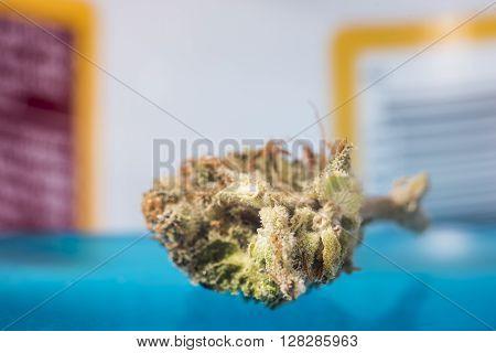 Recreational Marijuana nug shot in Denver Co ** Note: Shallow depth of field