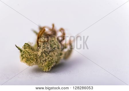 Citrus Kush Recreational Marijuana distributed by Lightshade in Denver ** Note: Shallow depth of field