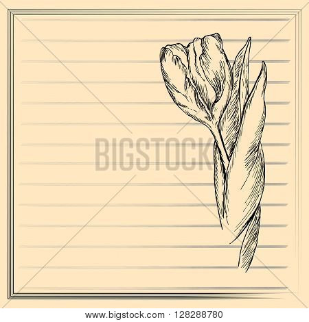 Graphic flower sketch of tulip on creamy background. Vector floral illustration in vintage style. Hand drawn artwork. Template for wedding invitation card congratulation greeting. Place for text.