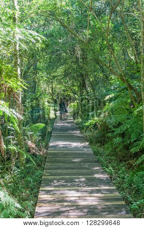 GARDEN OF EDEN SOUTH AFRICA - MARCH 3 2016: Unidentified tourists at the Garden Of Eden a network of boardwalk trails through the Tsitsikama Forest