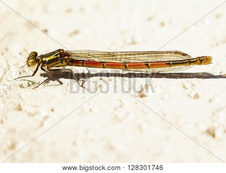 Beautiful dragonfly on a white wall in the spring