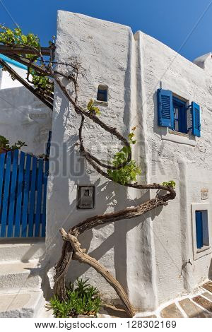 white houses with vine in town of Parakia, Paros island, Cyclades, Greece